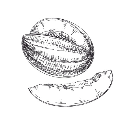 Beautiful vector hand drawn melon Illustrations. Detailed retro style images. Vintage sketch for labels. Elements collection for design. Vettoriali
