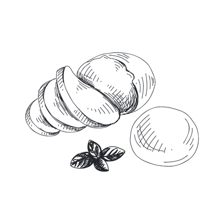 Beautiful vector hand drawn Mozzarella Illustration. Detailed retro style lychee image. Vintage sketch for labels. Elements collection for design. Illustration