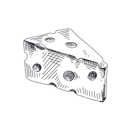 Beautiful vector hand drawn cheese Illustration. Elements collection for design.