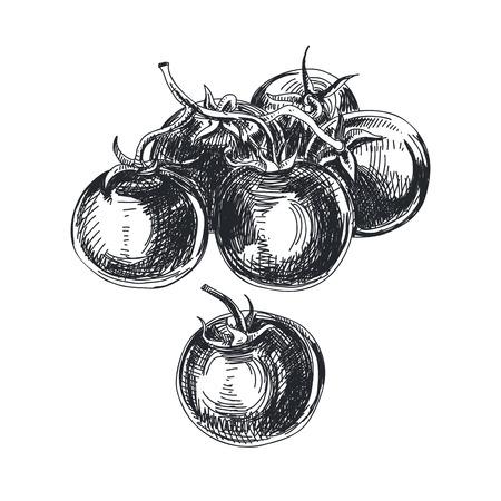 Beautiful vector hand drawn tomatoes Illustration.