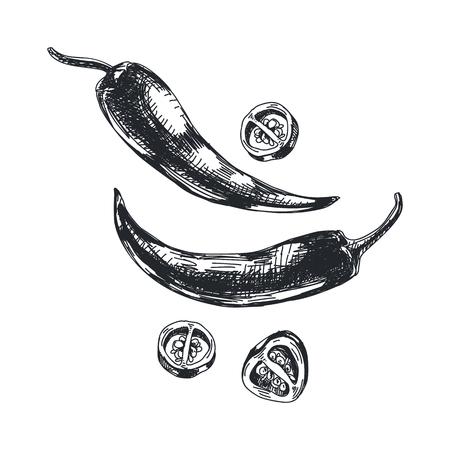 Beautiful vector hand drawn chili pepper Illustration.