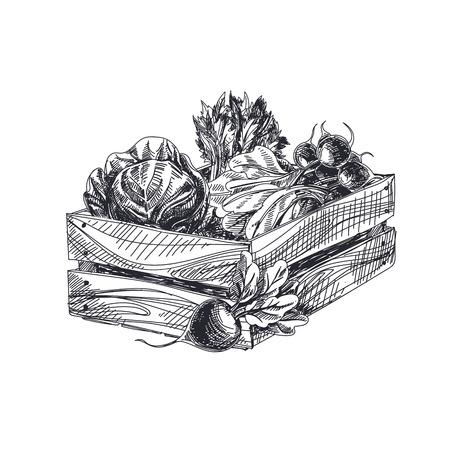 Illustration vectorielle de beau vecteur dessiné à la main. Caisse de style rétro détaillée avec image de légumes. Élément de croquis vintage pour la conception d'étiquettes, d'emballages et de cartes.