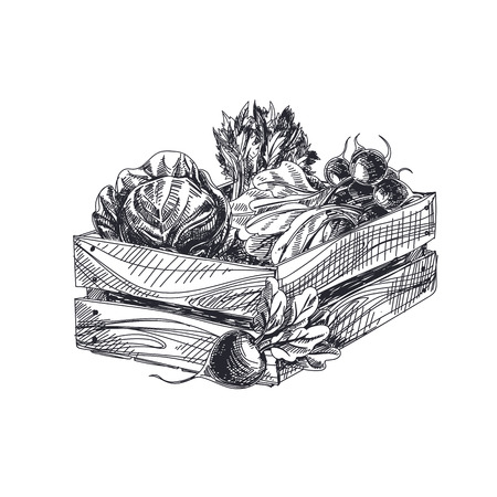 Beautiful vector hand drawn vegetables Illustration. Detailed retro style crate with vegetables image. Vintage sketch element for labels, packaging and cards design.
