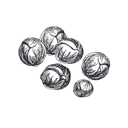 Hermoso vector dibujado a mano verduras ilustración. Imagen de coles de Bruselas de estilo retro detallado. Elemento de boceto vintage para diseño de etiquetas, envases y tarjetas. Foto de archivo - 95992577
