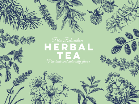 Beautiful vector hand drawn tea herbs Illustration. Detailed retro style images. Vintage sketches for labels. Elements collection for design. Imagens - 96757063