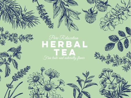 Hermoso vector dibujado a mano té hierbas ilustración. Imágenes detalladas de estilo retro. Bocetos vintage para etiquetas. Colección de elementos para el diseño.