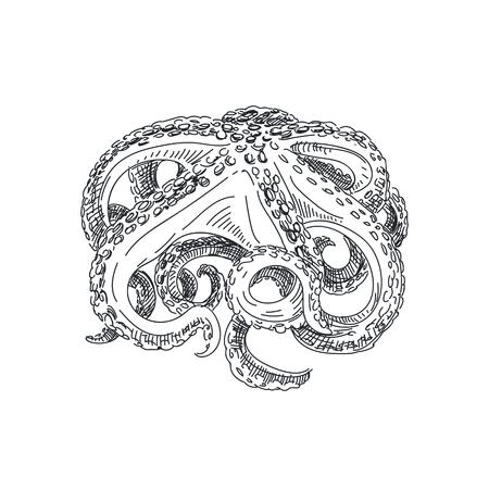 Beautiful vector hand drawn seafood Illustration. Detailed retro style octopus image. Illustration