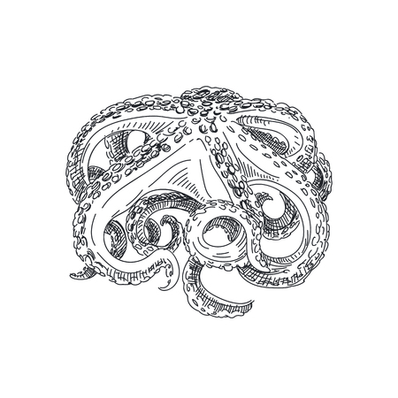 Beautiful vector hand drawn seafood Illustration. Detailed retro style octopus image. Stock Illustratie