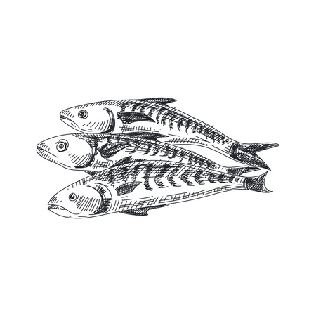 Beautiful vector hand drawn seafood Illustration. Detailed retro style mackerel image. Ilustrace