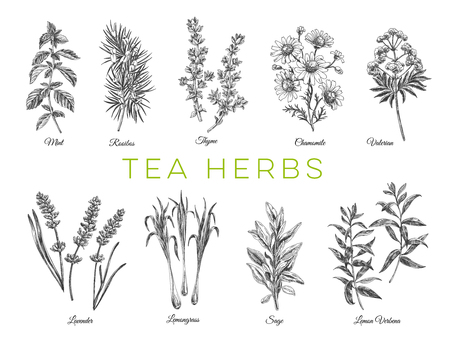 Beautiful vector hand drawn tea herbs Illustrations. Detailed retro style images. Vintage sketch elements for labels, packaging and cards design. Modern background. Ilustração