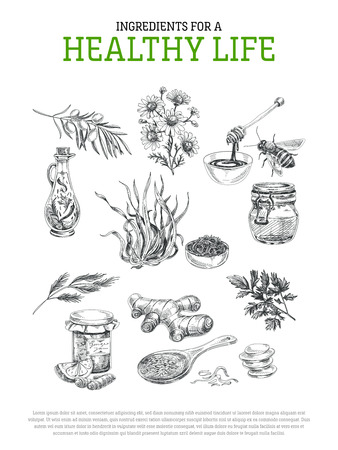 Beautiful vector hand drawn healthy ingredients Illustrations. Detailed retro style images. Vintage sketch elements for labels, packaging and cards design. Modern background.