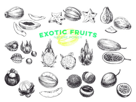 Beautiful vector hand drawn exotic fruits Illustrations set. Detailed retro style images. Vintage sketches for labels. Elements collection for design.