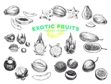 Conjunto de ilustraciones de frutas exóticas dibujadas a mano de vector hermoso. Imágenes detalladas de estilo retro. Bocetos vintage para etiquetas. Colección de elementos para el diseño.