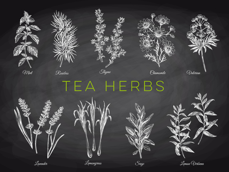 Beautiful vector hand drawn tea herbs Illustrations. Detailed retro style images. Vintage sketch elements for labels, packaging and cards design. Modern background. Chalkboard 写真素材 - 104284390
