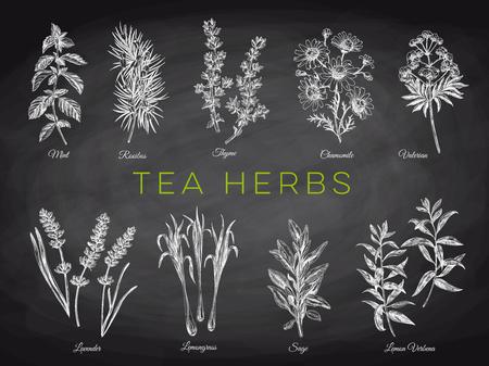 Hermoso vector dibujado a mano ilustraciones de hierbas de té. Imágenes detalladas de estilo retro. Elementos de dibujo vintage para diseño de etiquetas, envases y tarjetas. Fondo moderno. Pizarra