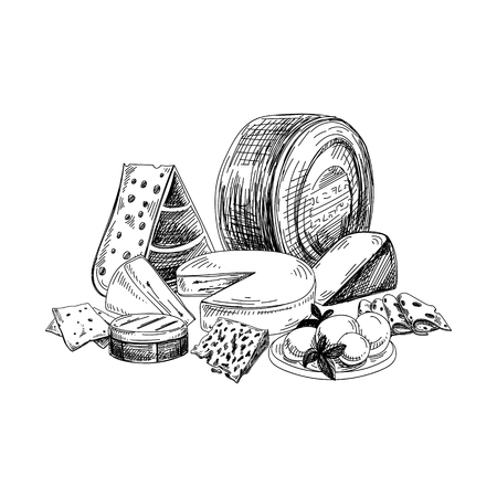 Beautiful vector hand drawn Cheese Illustration. Detailed retro style image. Vintage sketch element for labels, packaging and cards design. Modern background.