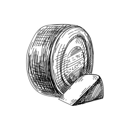 Prachtige vector hand getekende kaas illustratie. Gedetailleerde afbeelding in retro-stijl. Vintage schetselement voor het ontwerpen van etiketten, verpakkingen en kaarten. Moderne achtergrond.