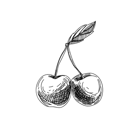 Beautiful vector hand drawn fruits