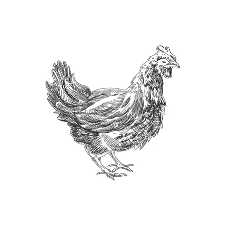Beautiful vector hand drawn chicken