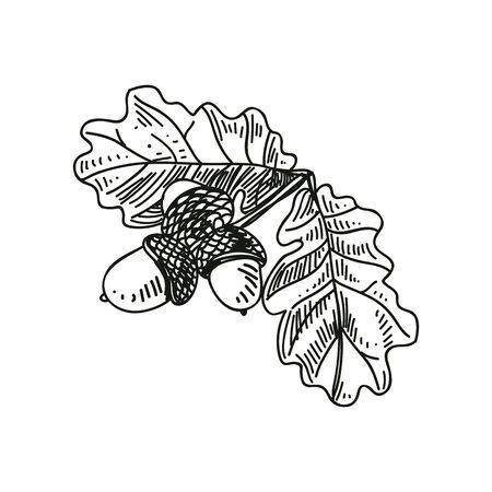 Oak branch hand drawn vector illustration