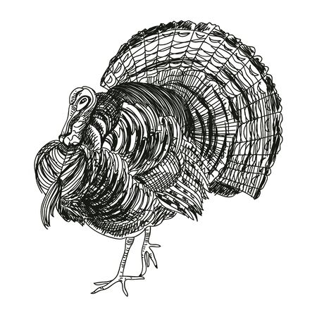 Turkey hand drawn vector illustration