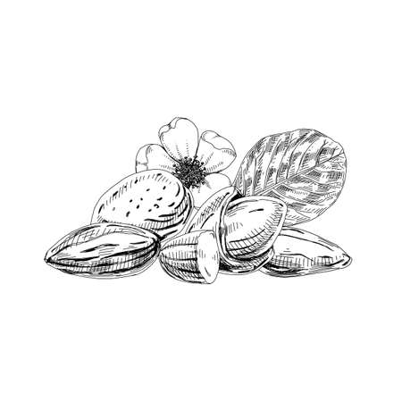 Flower, leaf, fruit and nut of almond plant
