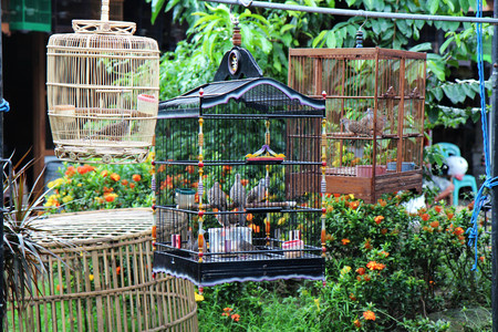 canaries are waiting for their fate in different cages
