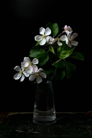 Blossom flowers in vase isolated on a black background shallow depth of field low key, selective focus