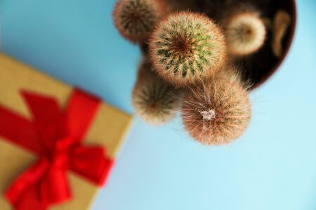 Cactus and gift box, the view from the top. Stock Photo