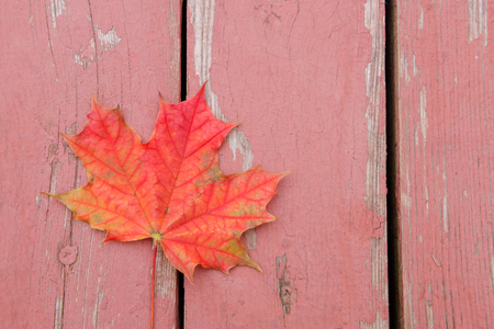 red bright autumn maple leaf on wood surface. Stock Photo