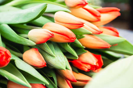 Bouquet of orange tulips close-up, a beautiful bouquet of tulips on the background of nature. Spring landscape. Floral background