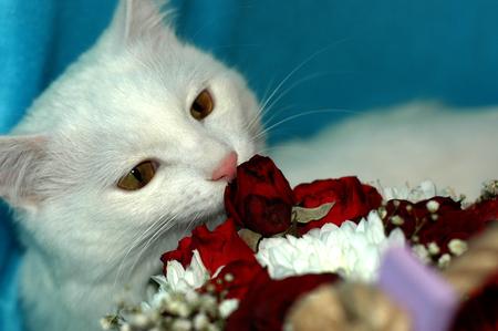 Witte kat maakt kennis met bloemen.