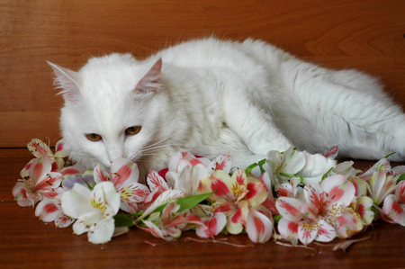 White cat gets acquainted with flowers.