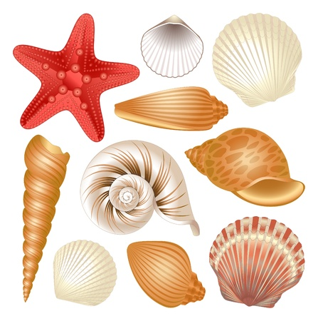 sea shells on beach: Colorful set of seashells and red starfish