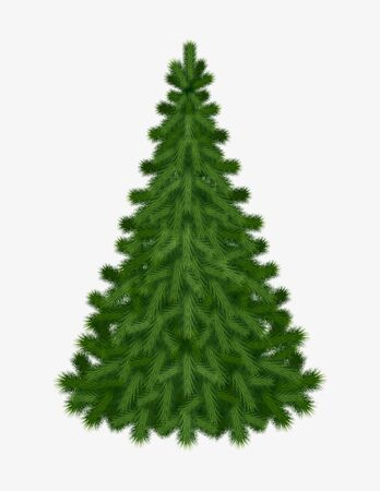 Christmas tree isolated on white background without any decorations for holiday season Christmas and New Year. Vector illustration. Illustration
