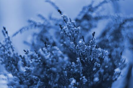 Classic blue background, copy space. Color of the year 2020. Nature floral background Stock Photo