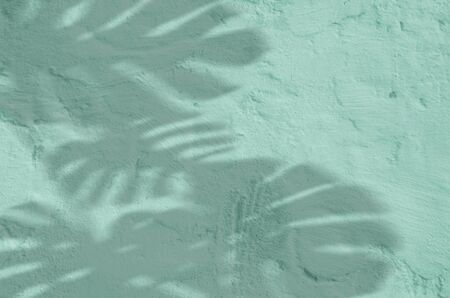 abstract background textuer of shadows leaf on a concrete mint wall Stockfoto