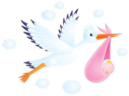 cigueña: Cigüeña blanca ofrece un recién nacido a sus padres