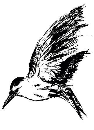 mew: Sea gull Stock Photo