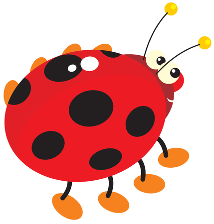 lady beetle: Ladybug