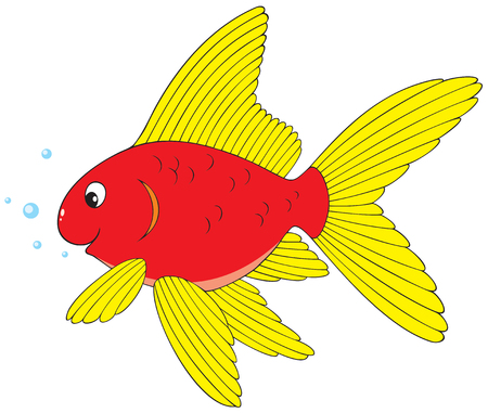 colorful fish: Goldfish