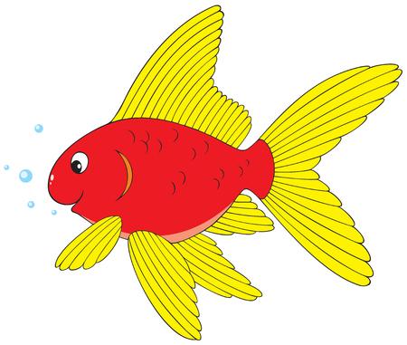 gold fish: Goldfish