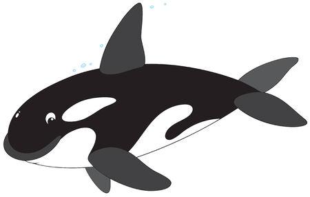 Killer whale Stock Vector - 6290549