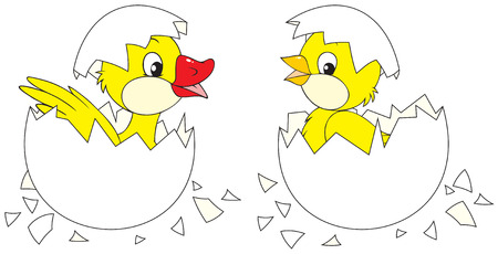 Hatching chick and duckling