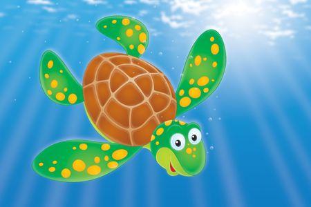 green sea turtle: Swimming Turtle