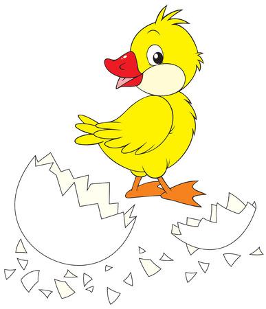 Duckling and broken egg Stock Vector - 6355785