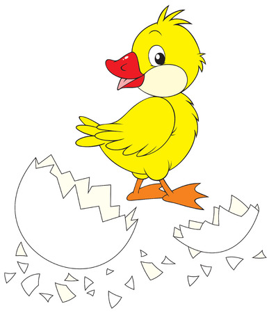 Duckling and broken egg Stock Vector - 6355785