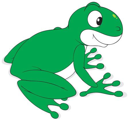 anuran: Green frog Illustration