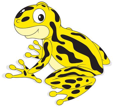 Poison-arrow frog