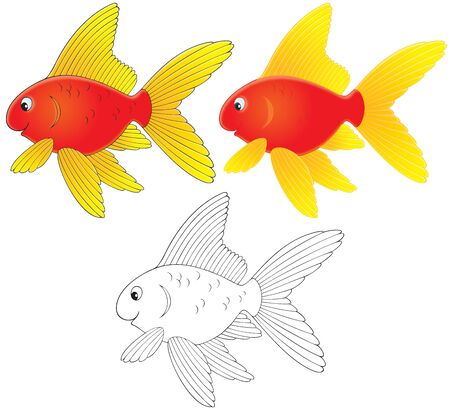 Goldfish Stock Photo - 6901071